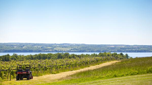 Long Point Winery in Aurora NY - featuring view of vineyard