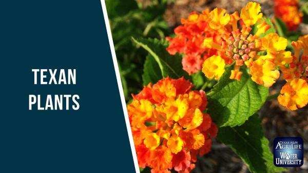 Texas Plants