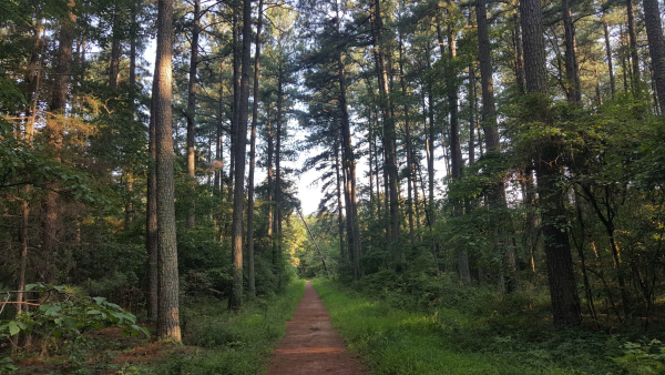 trail through trees at Conway Robinson State Forest