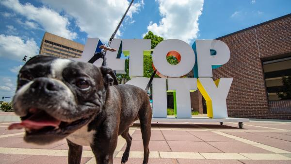 small black and white dog in front of a large sign with the words TOP CITY