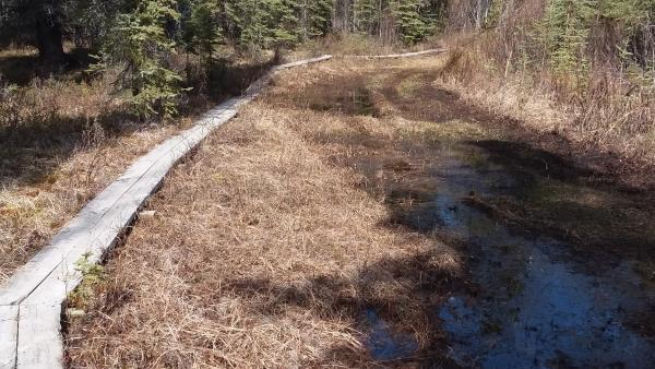 a hiking trail in the woods; planks over a boggy section