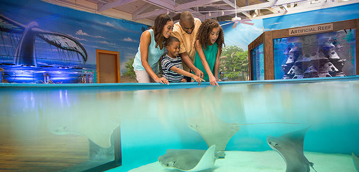 The stingray touch pool at the Marine Science Center