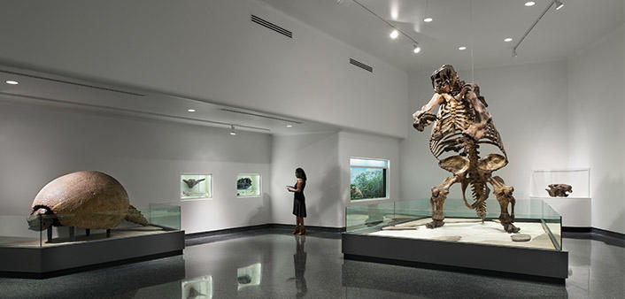 Natural history exhibit at the Museum of Arts & Sciences includes a Giant Ground Sloth