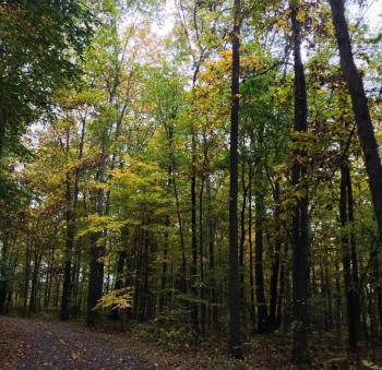 Glacier Ridge Fall Trees