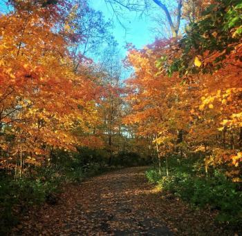 Trabue Nature Preserve Fall Trees