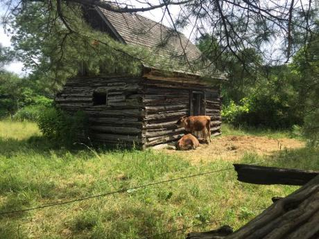 Genesee Country Village log cabin