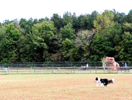 Chesapeake Dog Park
