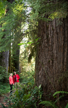 Hiking Delta Old Growth Forests