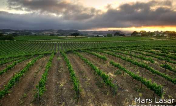 Windward Vineyard Summer 2.jpg