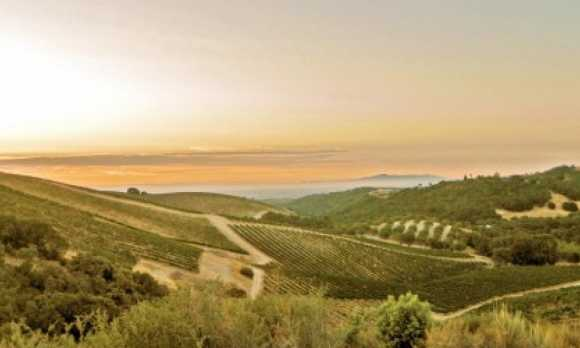 Sunrise-over-HMR-vineyard-600x284.jpg