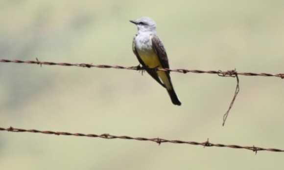 Bird watching - atascadero.JPG
