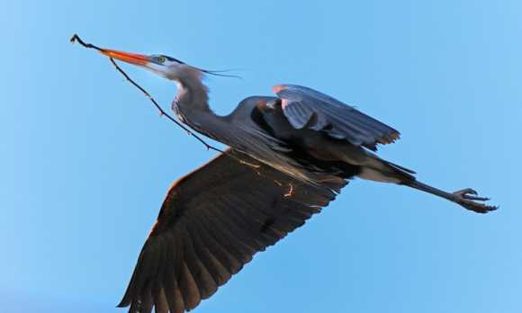 Heron Rookery.jpg