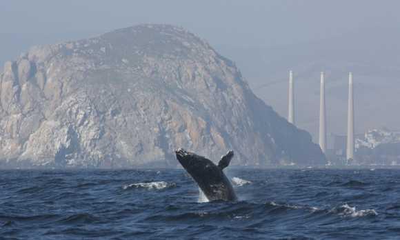 morro bay whale watching.jpg