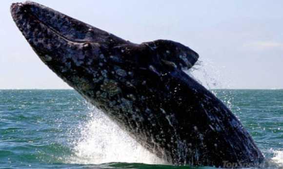 whale watching slo.jpg