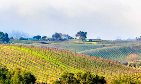Views of the Surrounding Vineyards from The Canyon Villa