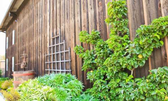 350x275 Harmony Cellars--26.jpg