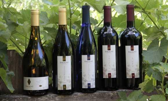 5 Bottles on Fence.jpg