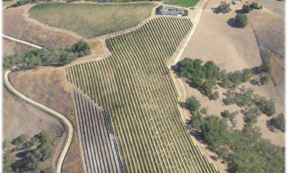 vineyardsaerial[1]0.jpg