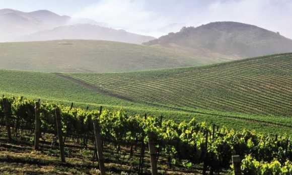 Vineyards Grand WEB.jpg