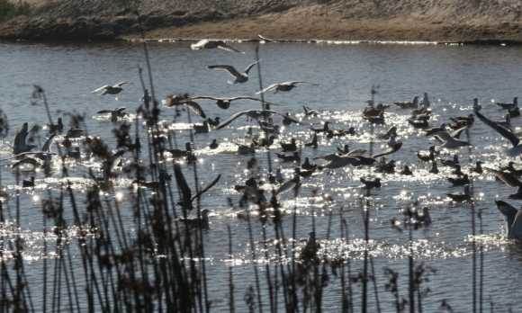 lagoon 019.jpg
