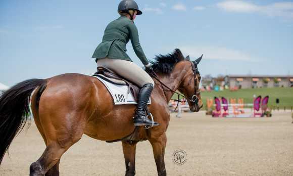 PR horse park 1