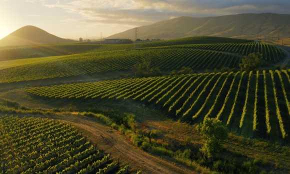 SLO Wine Country--Edna Valley 2