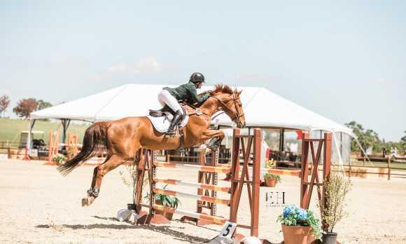 PR horse park 2
