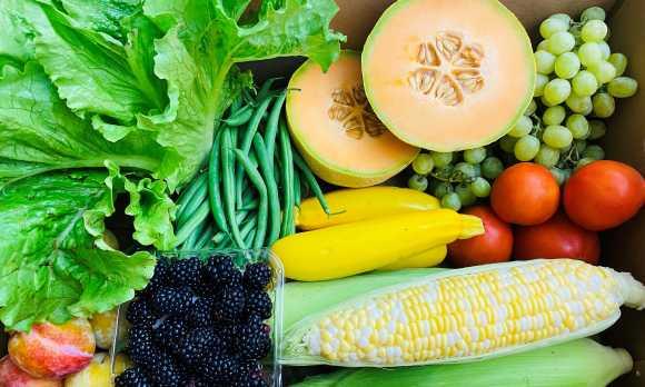 fresh harvest 2
