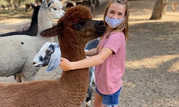 Goat & Alpaca Experience