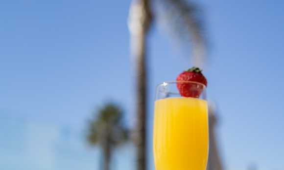 Mimosa on the Patio