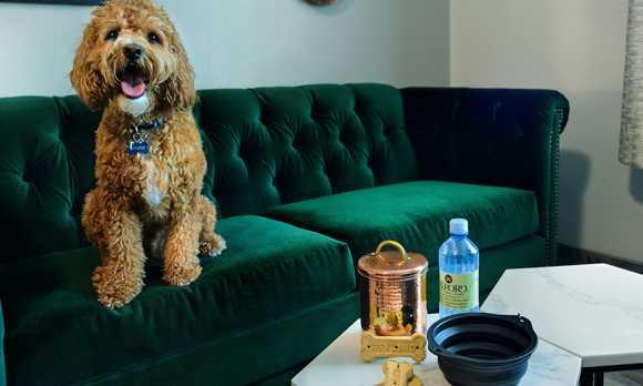 Pet Friendly Suites Available
