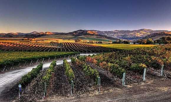 Santa Ynez Spring Vineyard