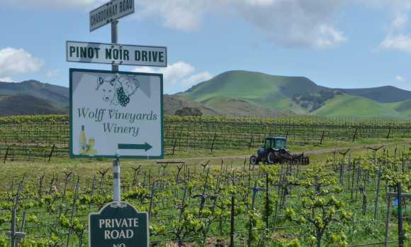 Pinot Noir Drive