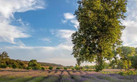 Lavender_Farm_main.jpg