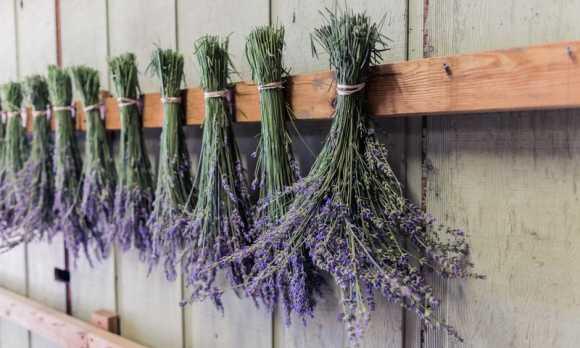 harmony lavender