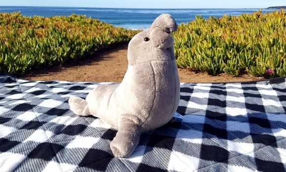 Elephant Seal Plush