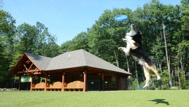A picture of a dog catching a frisbee at Lake George RV Park in the Adirondacks