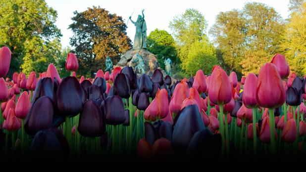 Washington Park tulips and King Memorial Fountain. Photograph - Beth Hickox; Courtesy Albany Tulip F