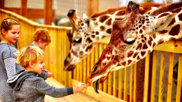 Kids feeding giraffes at Animal Adventure Park