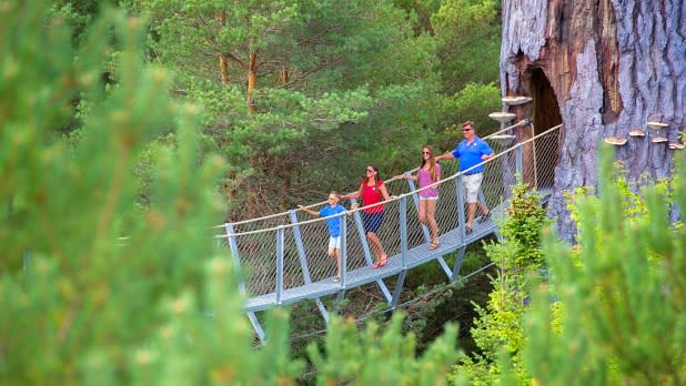 The Wild Walk tree canopy walk at The Wild Center