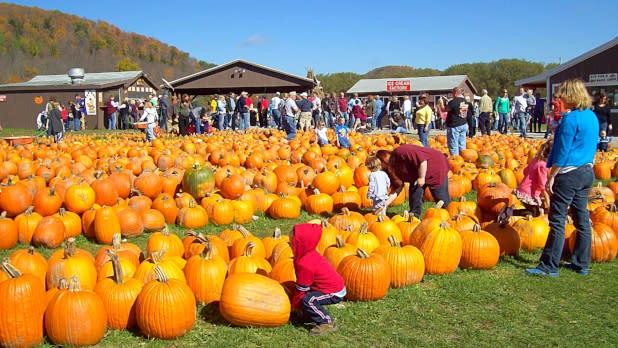 Pumpkinville - Cattaraugus County EDPT