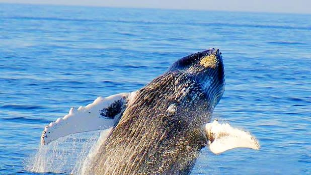 Watch for Whales in Montauk