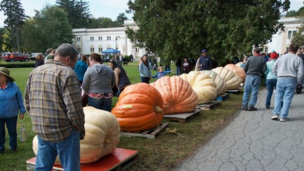 The Saratoga Giant Pumpkinfest
