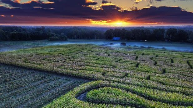 Rhinebeck Corn Maze