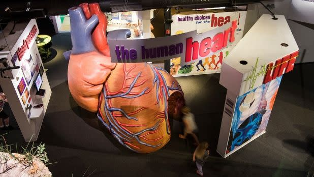 The human heart exhibit at MOST- Milton J. Rubenstein Museum of Science & Technology in Syracuse, New York