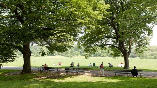 Prospect Park Meadow in NY