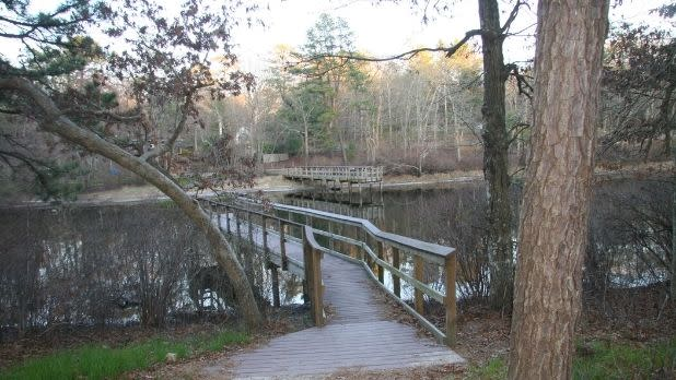 A view of wooden walkways over water in the Ridge Conservation Area