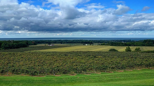 A landscape photo of Noble Winery in Westfield with Lake Erie in the background
