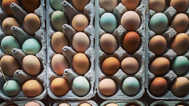 An overhead photo of a bunch of eggs in cartons at the Beacon Farmer's Market