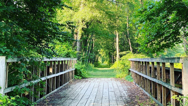 A wooden bridge leading to a forest trail